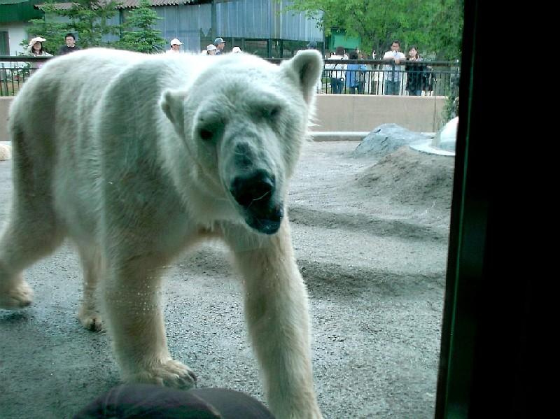 旭山動物園ほっきょくぐま館