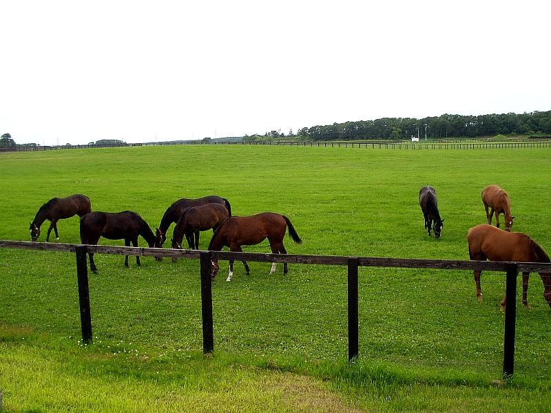 ノーザンホースパーク近くの牧場で見かけた競走馬